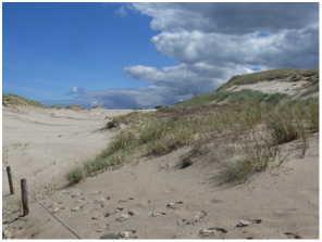 Dunes de la baltique